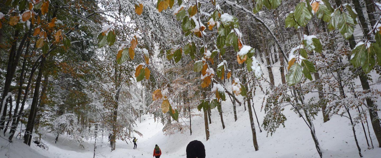 Im Promischkagraben. Foto: Alpenverein Edelweiss