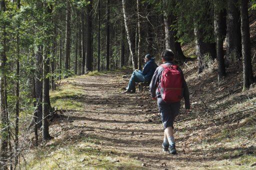 Durch Wälder und Wiesen 2. Foto: Gerold Petritsch