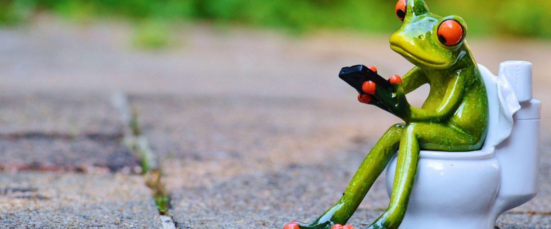 Frosch am Wc