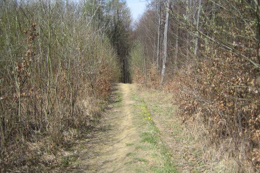 Abstieg nach Unterkirchbach 1. Foto: Johann Fischer