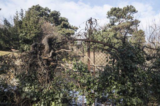 Verwunschene Gärten beim Zierleitenweg. Foto: Birgit Reiter