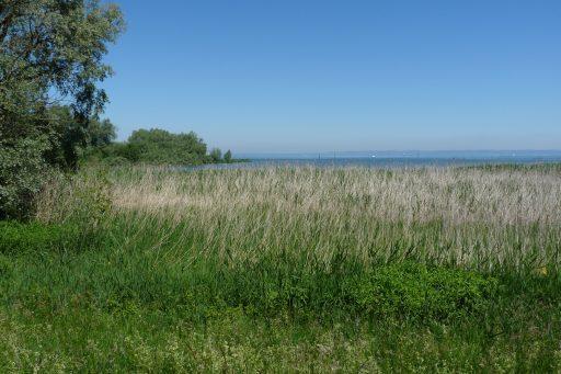 Naturatrail Rheindelta. Foto: Andrea Lichtenecker