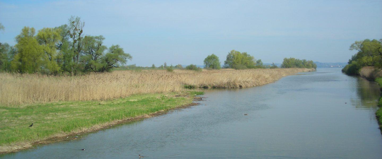 Rheindelta. Foto: Andrea Lichtenecker
