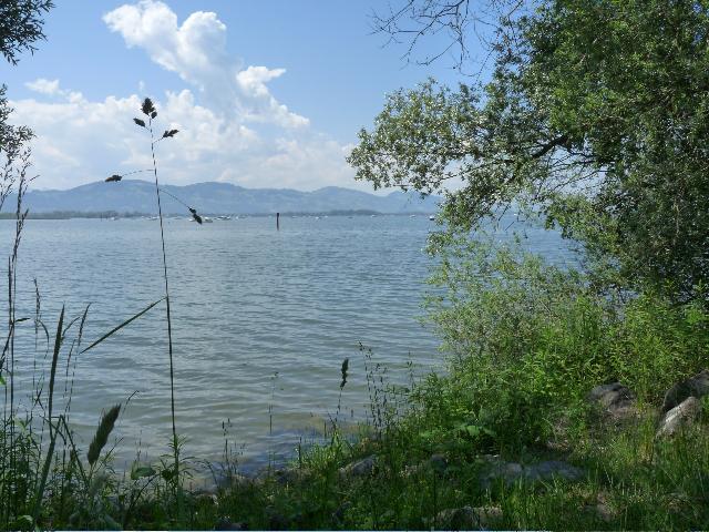Naturatrail Rheindelta. Foto: Naturfreunde Österreich