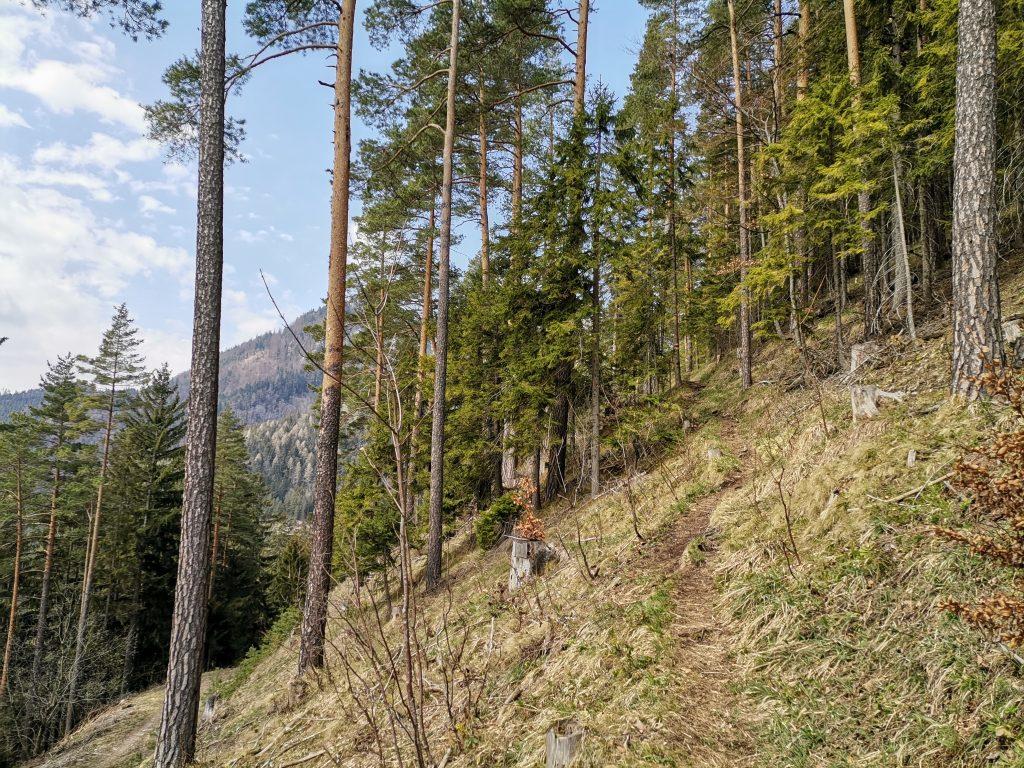 Auf einem schönen, schmalen Waldwegerl gehts hinauf zum Obersberg. Foto Veronika Schöll