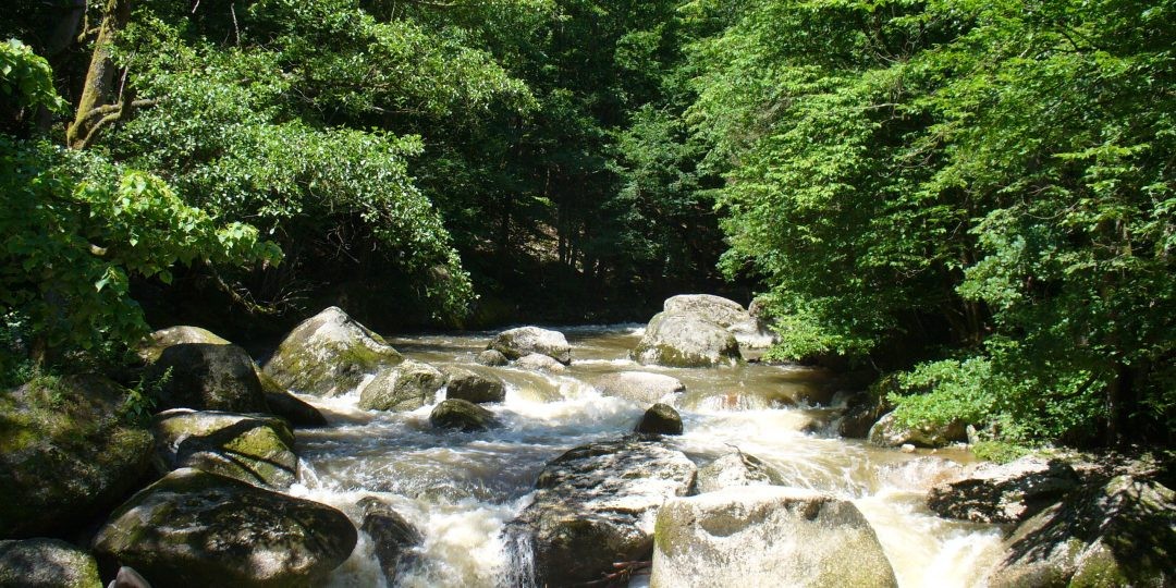 Natura Trail Feldaist. Foto: Andrea Lichtenecker