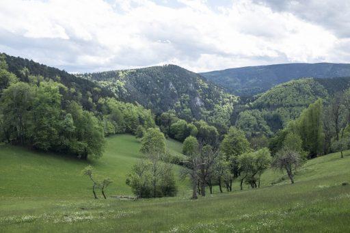 Landschaft bei Gutenmann 2. Foto: Birgit Reiter