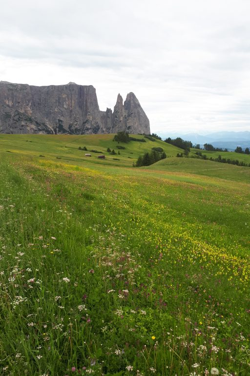 Blick über das Blumenmeer der Seiser Alm hinüber zum Schlern, unser heutiges Tagesziel. Foto: Konrad Gwiggner