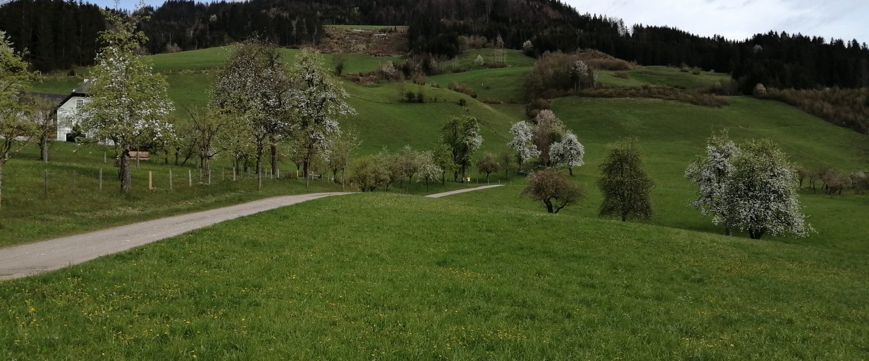 Opponitz navh Oberland. Foto: Jürgen Birgl