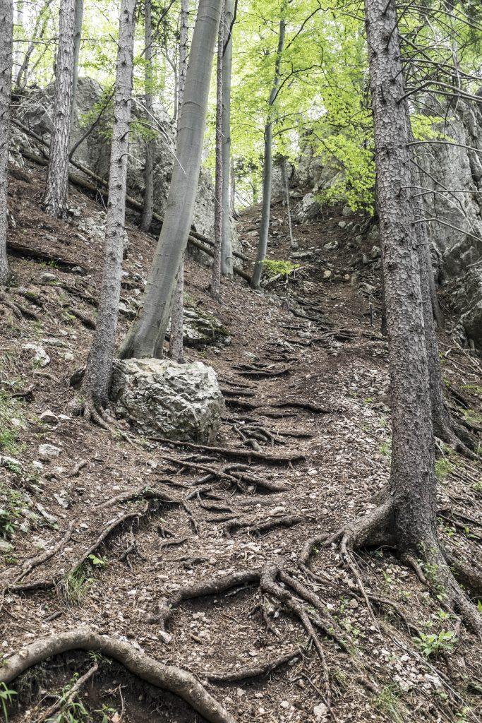 Steiler Aufstieg. Foto: Birgit Reiter