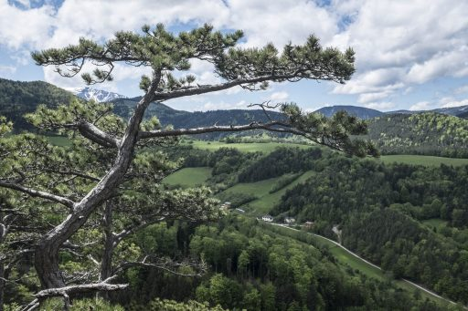 Schneeberg im Hintergrund. Foto: Birgit Reiter