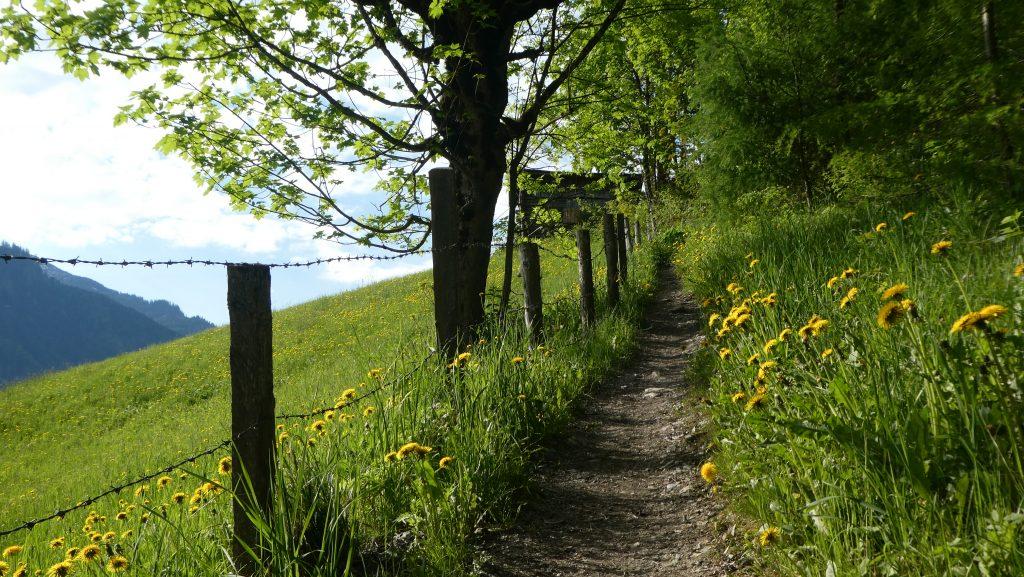 Wegstück zwischen Niederaigen und Mandldörfl. Foto: Karl Plohovich