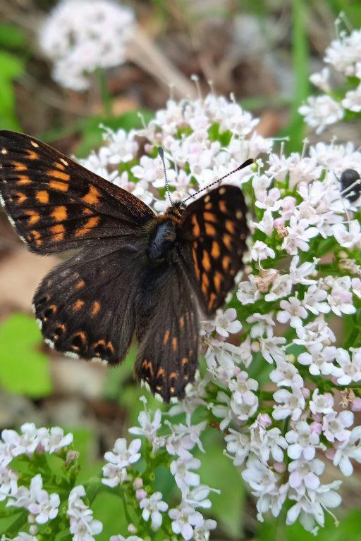 Schmetterling. Foto: Birgit Frank