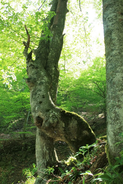 Knorriger Baum. Foto: Birgit Frank