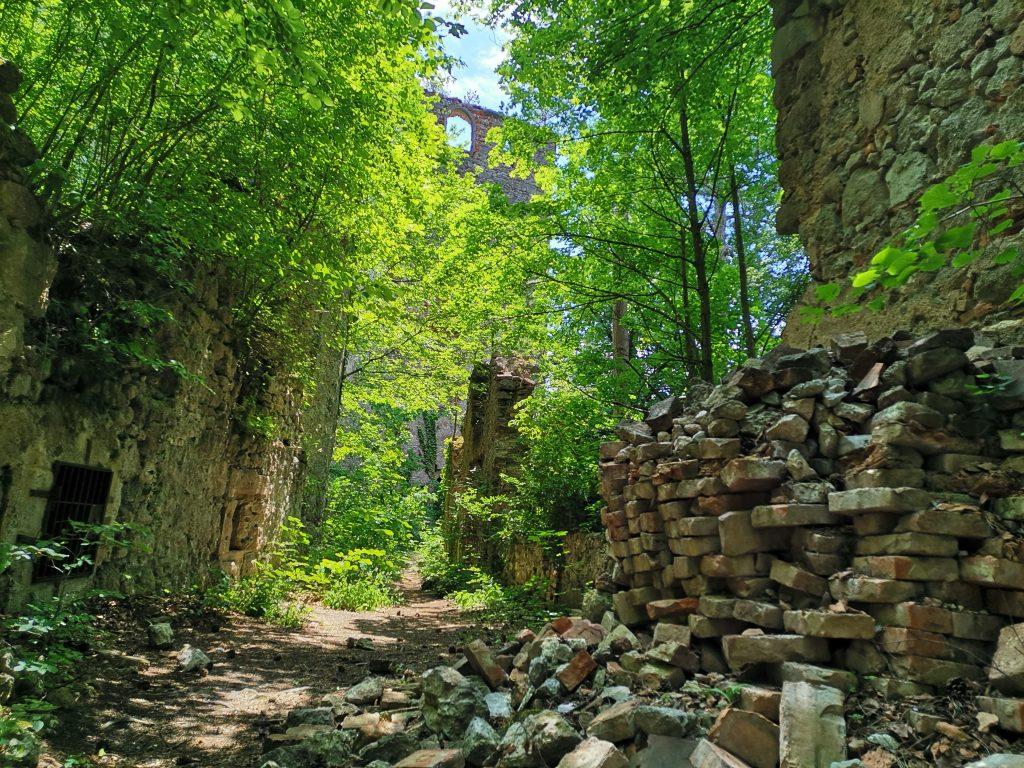 Ruine Merkenstein. Foto Veronika Schöll