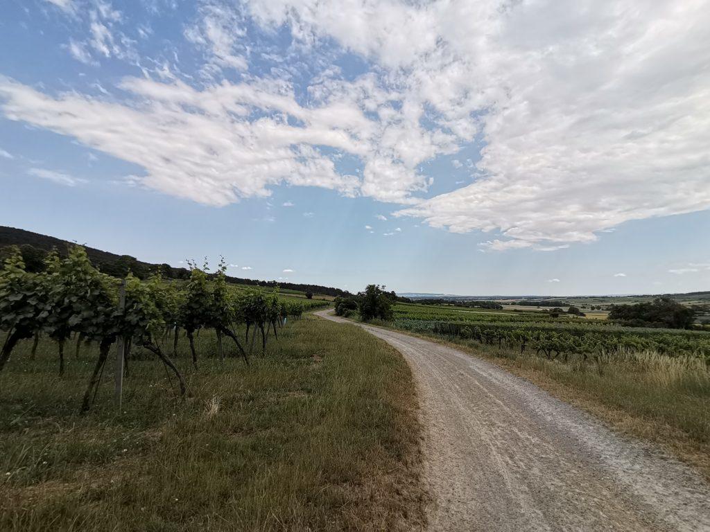Durch die Weingärten nach Gainfarn. Foto Veronika Schöll