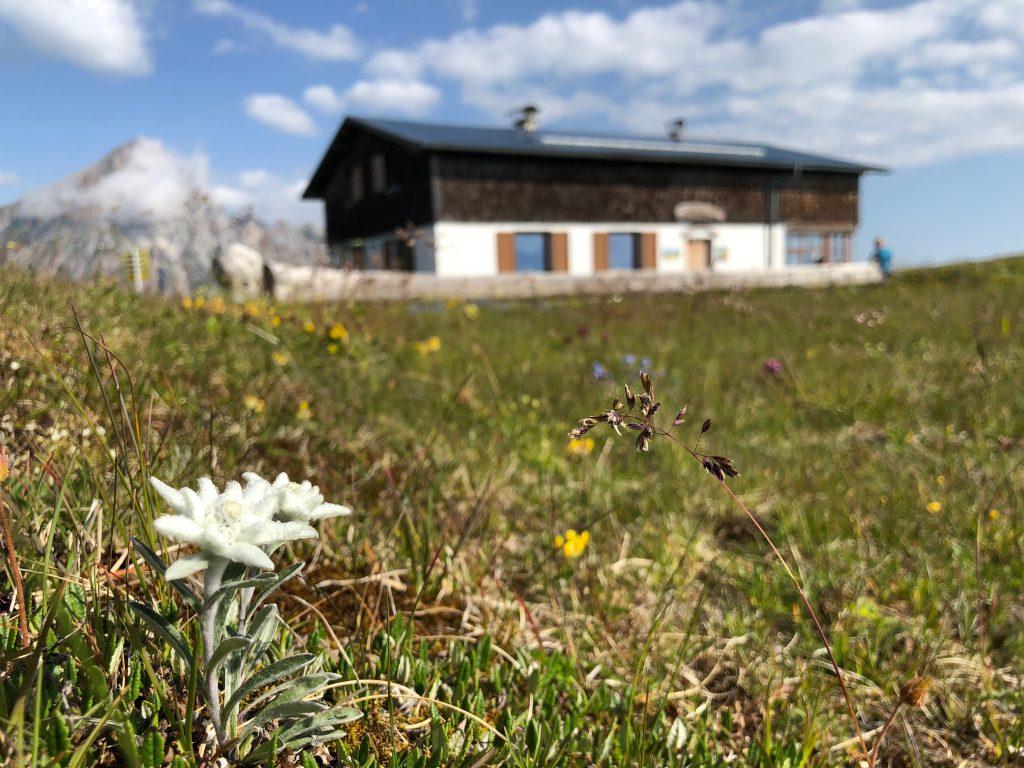 Blaser Hütte mit Edelweiß. Foto: Judith Hammer