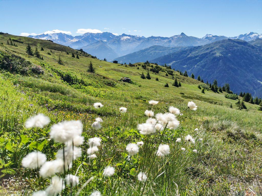 Über die Obernberger Mähder ins Tal mit Wollgras am Wegesrand