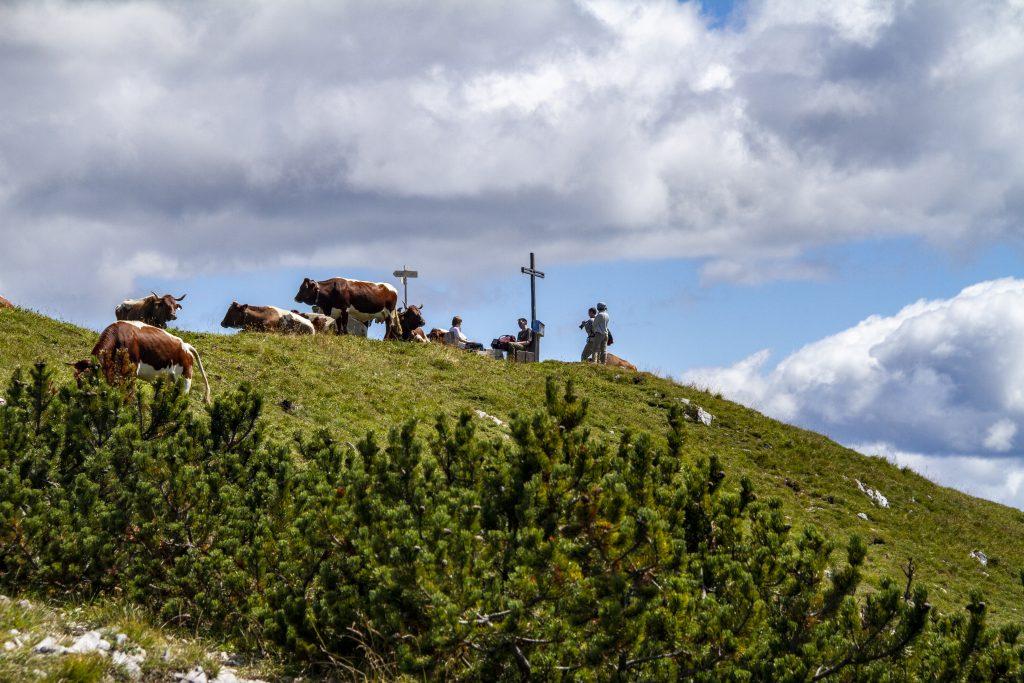 Das Gipfelkreuz am Golz müssen wir uns teilen. Foto Alpine Pearls