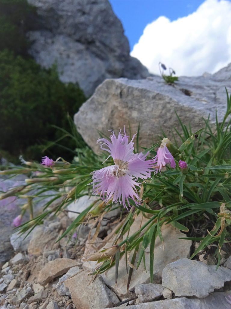 Blumenvielfalt. Foto: Birgit Frank