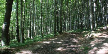 "13 WohlfühlWeg ""Der Wienerwald bei Rekawinkel"""