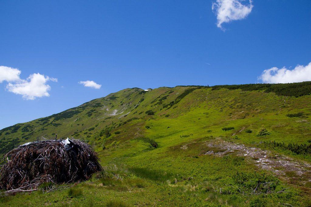 Ein Biwak aus Nadelgehölz am Schildhahnboden. Rechts geht es weiter den Latschen entlang Richtung Feistererhorn das in der Bildmitte zu sehen ist. Foto: Franz Haas