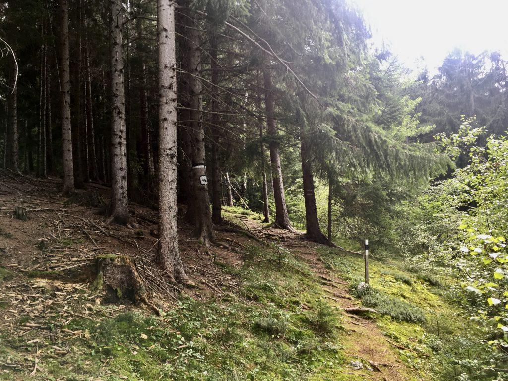 Am Waldweg von Prein. Foto Krisztina Grünzeis