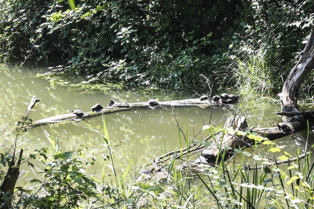 Schildkröteninsel.  Foto: Birgit Reiter
