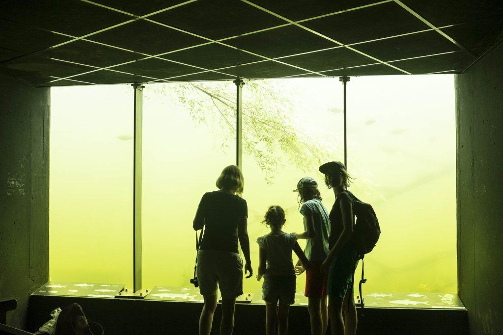 Am Fenster der Unterwasserbeobachtungsstation. Foto: Birgit Reiter