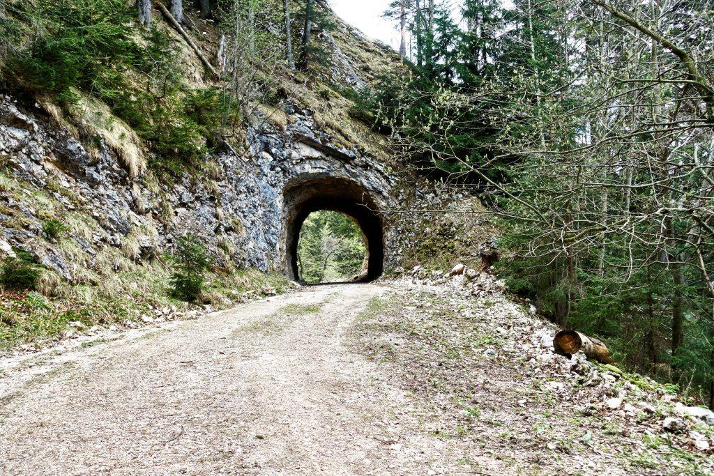 Forstweg mit Tunnel