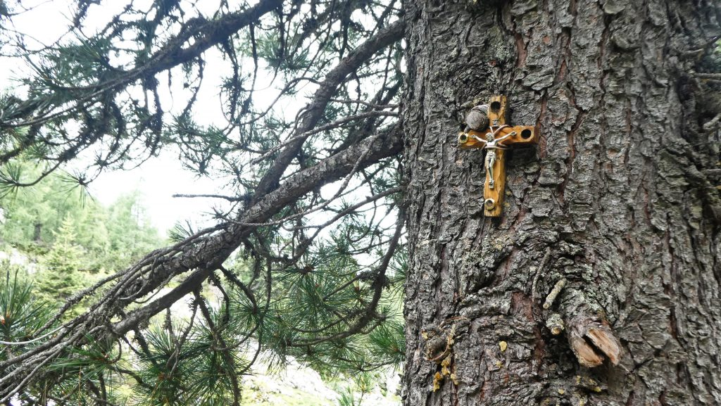 Zirbe mit Kreuz. Foto: Karl Plohovich