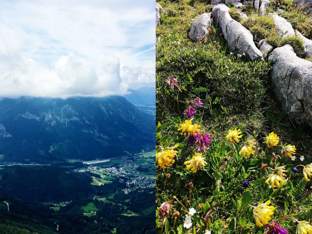 Die Autobahn im Tal. Die Blumen am Berg. (Fotos: Stefan Hochhold)