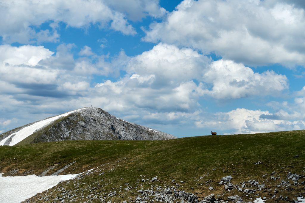 Hohe Weichsel und Bergbewohner. Foto Martin Heppner