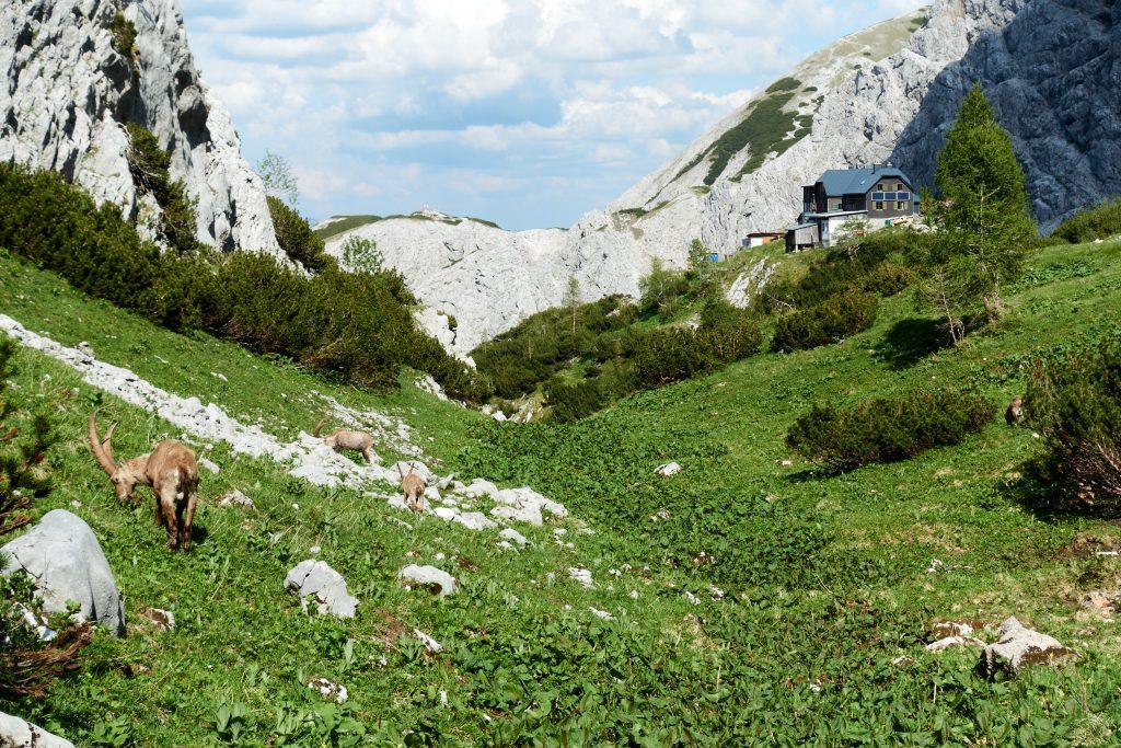 Die alte Voisthaler Hütte. Foto Veronika Schöll